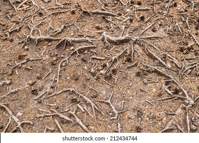 Tree roots background or texture or pattern on the ground