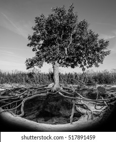 Tree with roots and burrow. Black and white