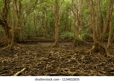 Tree roots in Dark forest background with strange characteristic
