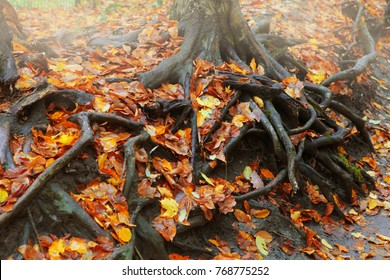 Tree roots with fallen autumn leaves