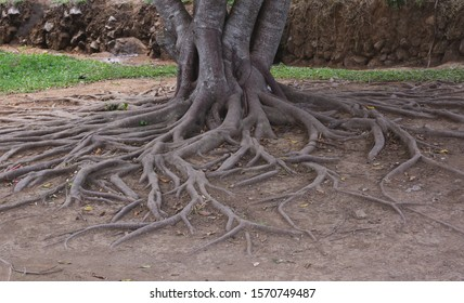 Tree roots in the garden, Nature background concept