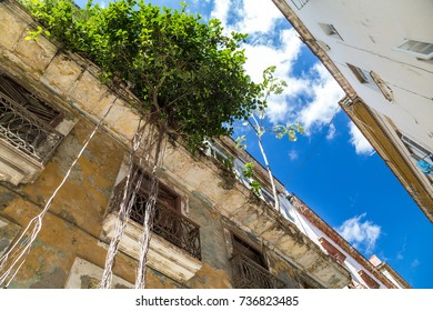 Tree roots hanging from dilapidated house in Old Havana, Cuba