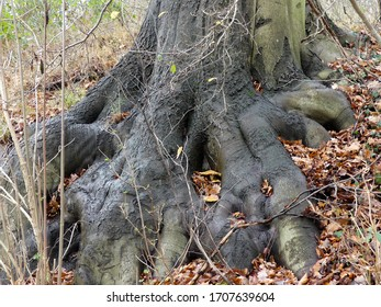 tree roots like a claw