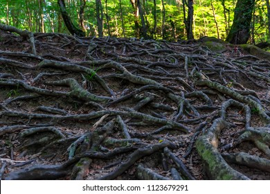 Tree roots on forest close