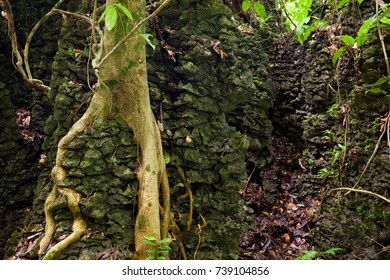 Tree roots on stone wall in forest