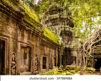 Tree roots over the Ta Prohm (Rajavihara), a temple at Angkor, Province, Cambodia. It was founded by the Khmer King Jayavarman VII as a Mahayana Buddhist monastery and university.
