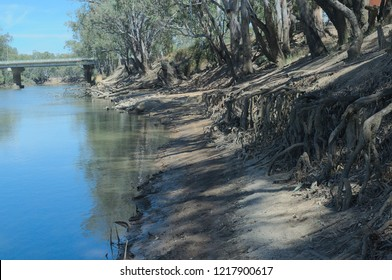 tree roots showing on a river bank near a drying river in a drought on sunny day