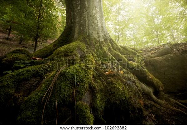 Baumwurzeln und Sonnenschein im grünen Wald