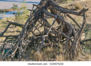 Tree roots which have been exposed owing to the effect of flood waters on a river bank in Queensland, Australia