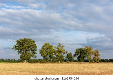Tree row at a stubble field in the Wesermarsch