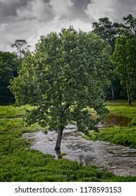 Tree in Running Stream