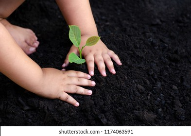 tree sapling Baby Hand On the dark ground, the concept implanted children's consciousness into the environment