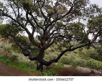 Tree of Sardinia countryside