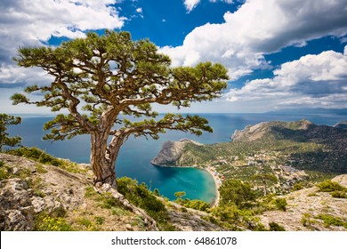 Tree and sea