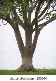 Tree with sea background
