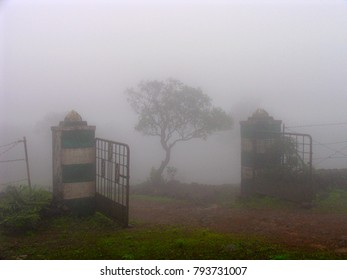 Tree seen through fog