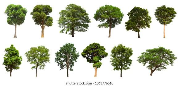 Tree set, isolated tree, set on a white background