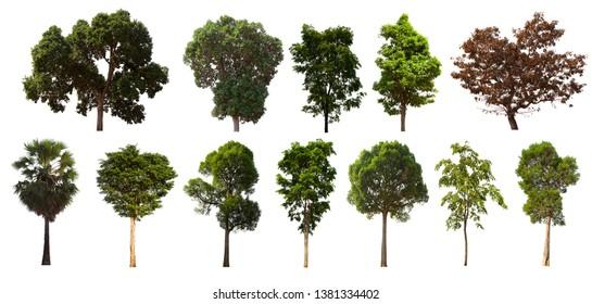 Tree set, isolated tree Set on a white background