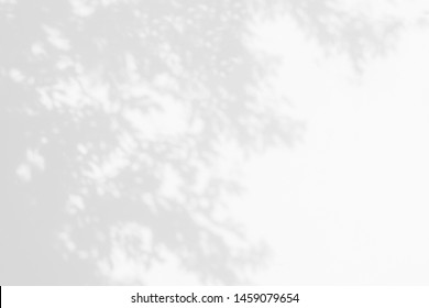 Tree shadow with leaves, branch and light shadow of big tree on white concrete wall background, monochrome, nature shadow art on wall