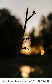 Tree in shadow on blurred sunset background