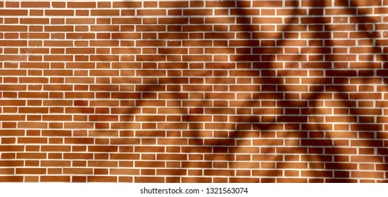 Tree shadow on brick wall.