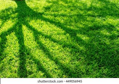Tree shadow on grass
