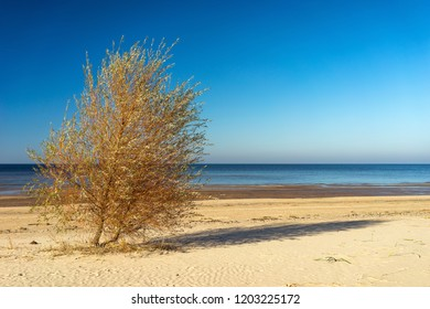 Tree with shadow on a sandy beach