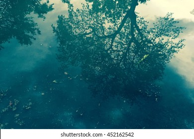 Tree Shadow Reflection on Water Process in Cross Style