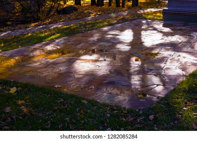 Tree shadow and sunspots as abstract  graphic pattern  on wet colored paving slabs