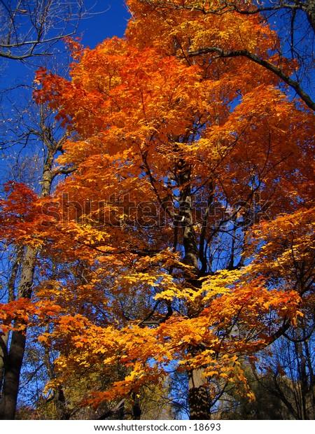 Tree showing it's autumn colors