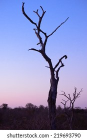 Tree Silhouette in African Bush