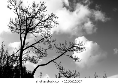 Tree silhouette against sky