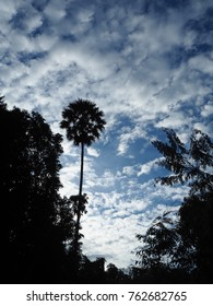 tree silhouette - art of sky