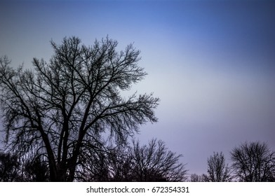 Tree silhouette with a beautiful blue sky in the background