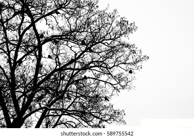 Tree silhouette, bird