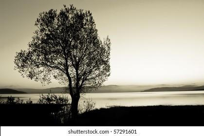 tree silhouette  black and white landscape