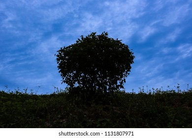 Tree silhouette and blue sky
