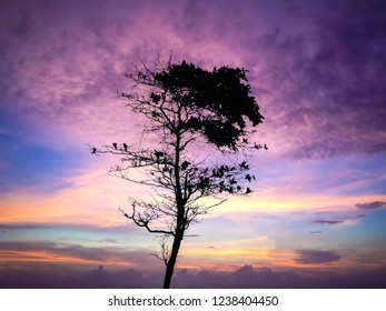 Tree Silhouette In The Colorful Sunset Light At Batu Bolong Beach, Canggu Village, Badung, Bali, Indonesia