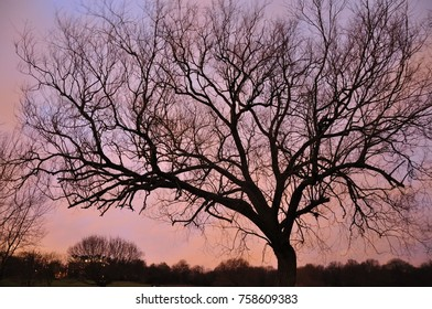 Tree silhouette with colors