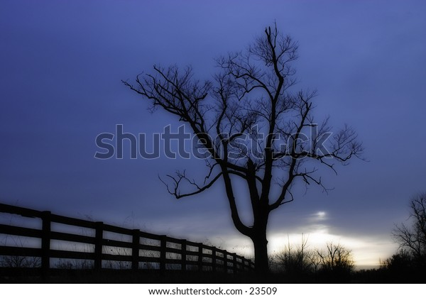 Tree silhouette at dawn.