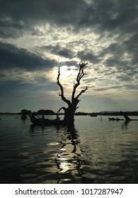 Tree silhouette during lake sunset