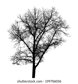 Tree Silhouette Isolated on White Backgorund.