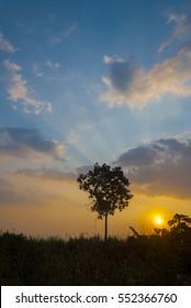 Tree silhouette on open field dramatic sunset. Guatemala