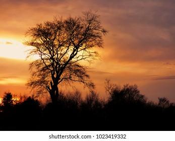 tree silhouette, orange sunset  background