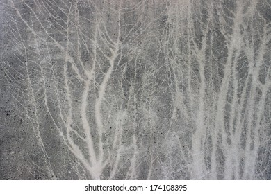 A tree silhouette printed on a stucco wall
