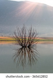 tree silhouette reflected in a lake