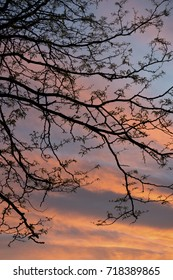 Tree silhouette with soft blue and orange sunset clouds in background.