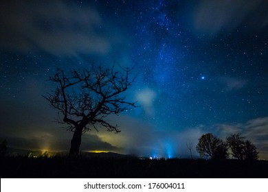 Tree silhouette in a starry night