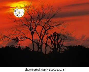Tree silhouette and sunset background