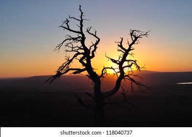 Tree Silhouette In The Sunset Light In The Mountains